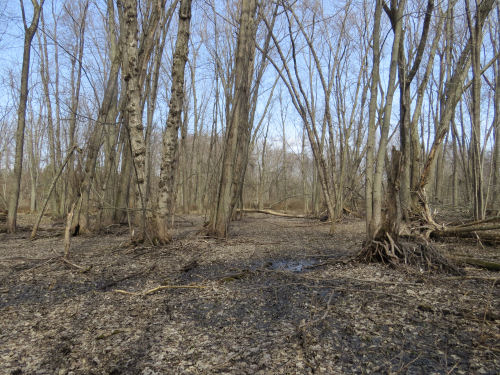 bttomland hardwood swamp