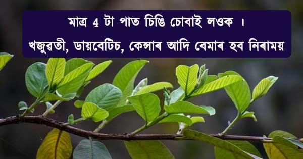 guava-leaf-health-benefits