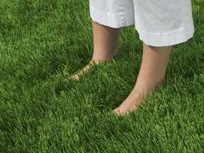 Amazoy Zoysia Grass