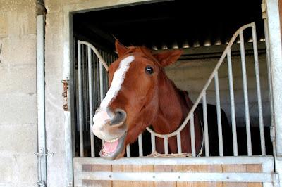 Est-ce que je suis une mauvaise propriétaire si mon cheval vit au box ?