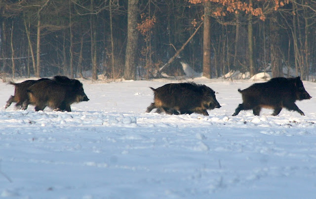 Bialowieza Forest,Poland