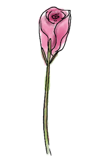Free pink rosebud png clip art image in pen and wash