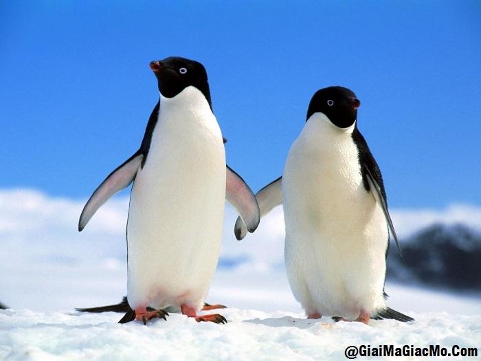 Giải mã giấc mơ thấy chim Cánh cụt & ngủ nằm mơ thấy con Cánh cụt