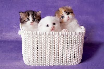 https://lalellecats.blogspot.com/p/blog-page_57.html
