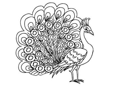 Gambar Mewarnai Burung Merak Untuk Anak Paud Dan Tk