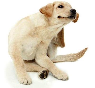 Mascotas: Alergia y sensibilidad