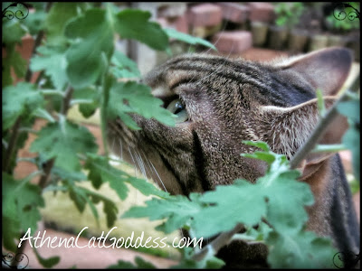 cat sniffing plant