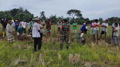 Babinsa Apresiasi Tradisi Mapalili di Desa Lerang Kabupaten Pinrang