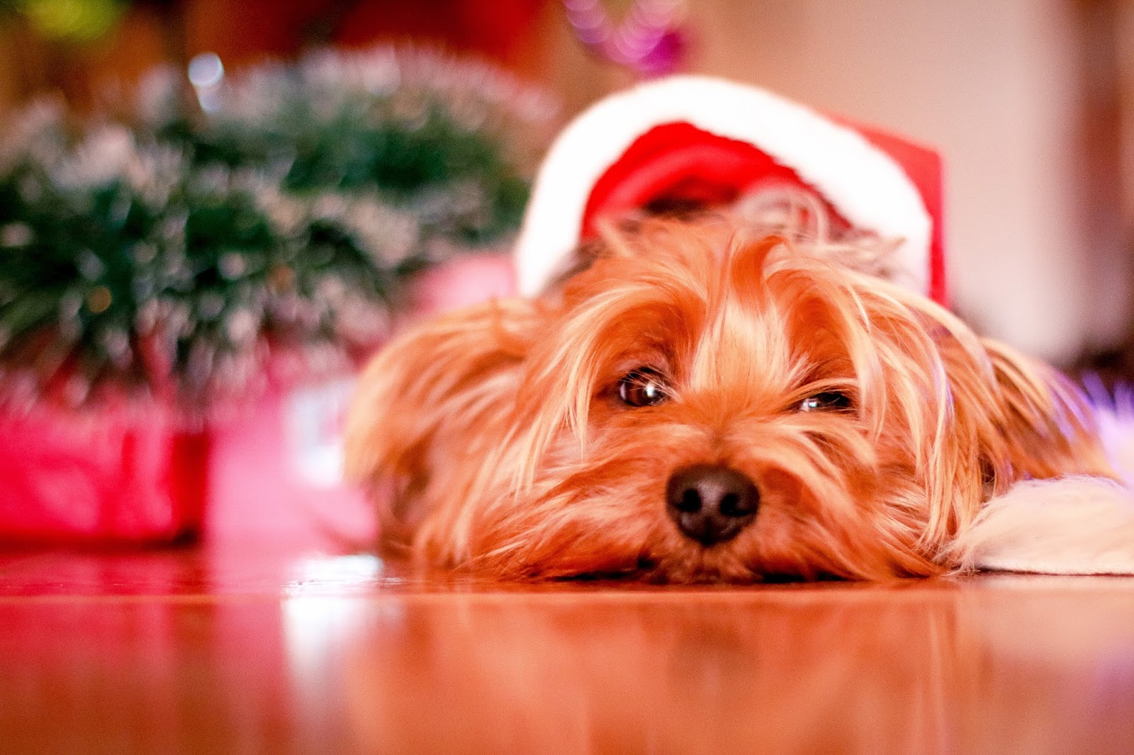 Helpful Christmas Stocking Filler Tips For Kids And Pets