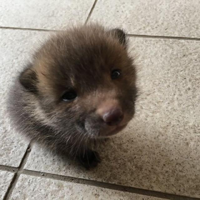 Японец нашёл щенка и попытался отыскать его хозяев. Оказалось, что это не щенок