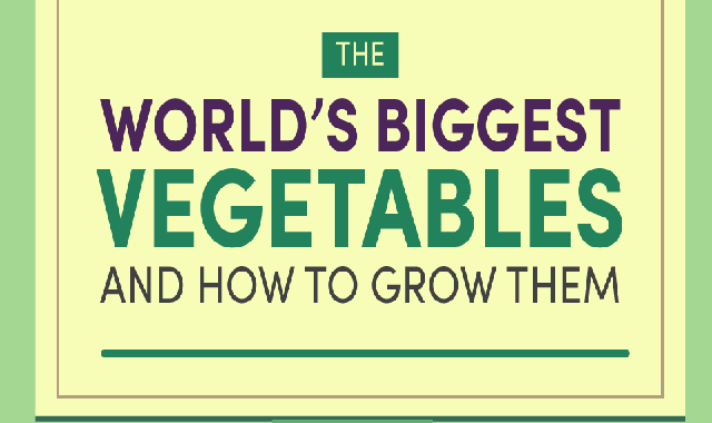 The worlds biggest vegetables And How To Grow Them #infographic