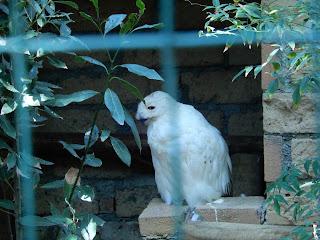 Parco Gallorose(ガッロロゼ公園)フクロウ