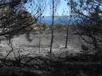 Požar iznad plaže Zlatni Rat Bol slike otok Brač Online