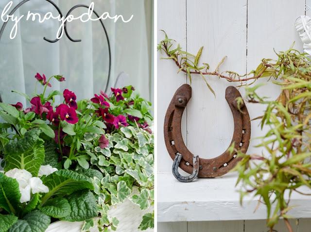 Blumenkasten mit Hornveilchen und Primeln