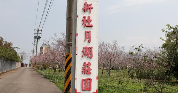 台中新社|2019新社月湖莊園富士櫻|新社賞櫻秘境