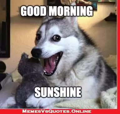 Good Morning Beautiful memes sunshine