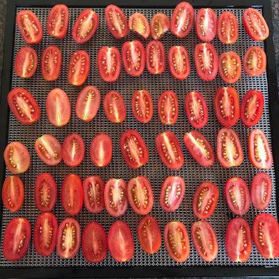 halved tomatoes on a dehydrator tray