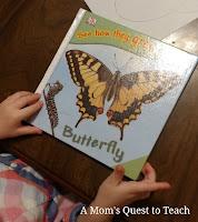 butterfly children's book