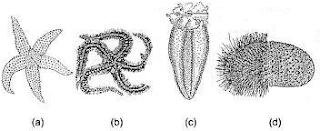 Pembahasan Soal Simak UI 2014 Biologi Kode Soal 301