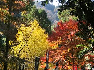 建長寺の紅葉・黄葉