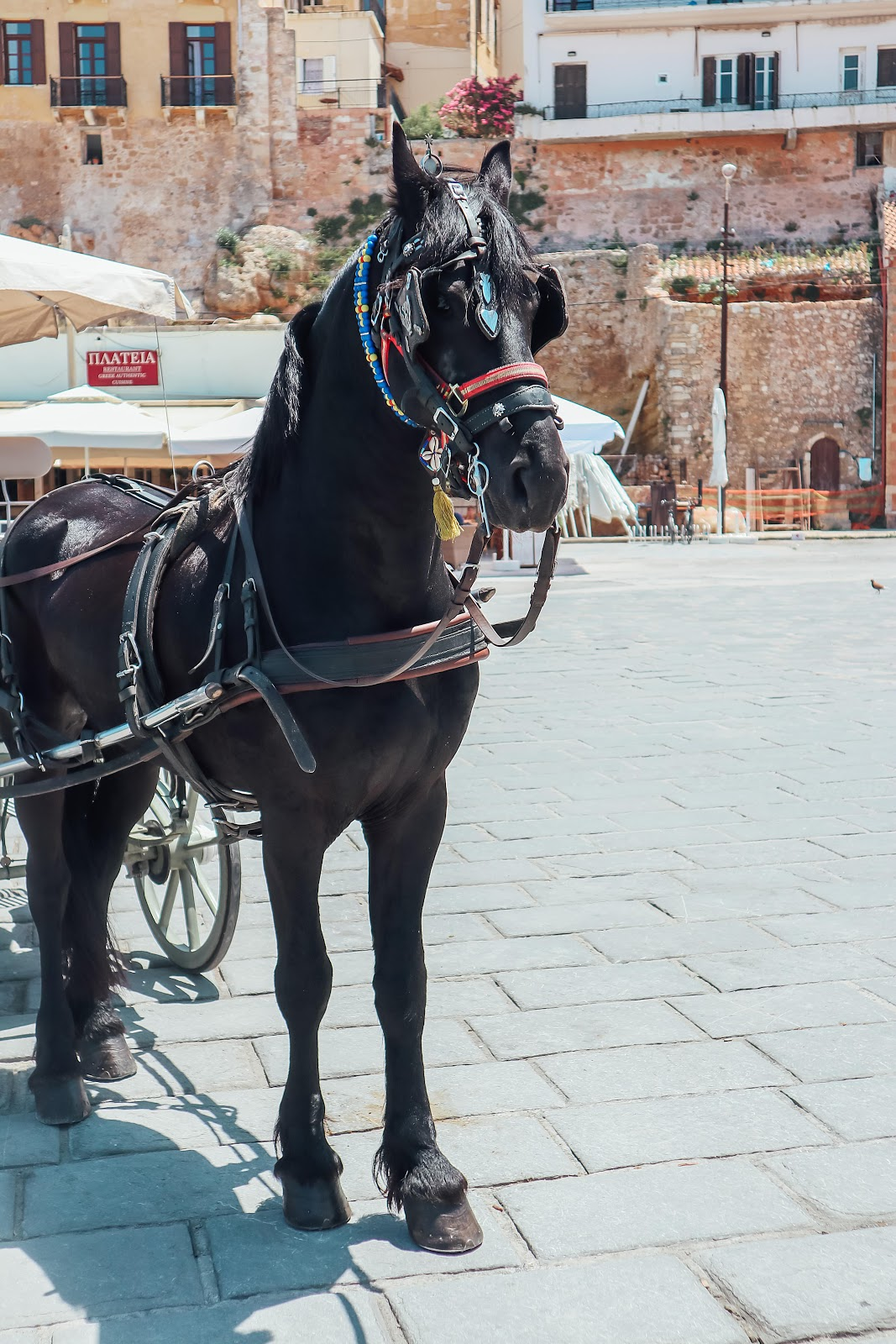 Horse ride in Chania