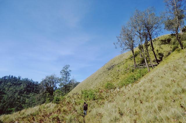 Savana Padang Rumput Gunung Semeru
