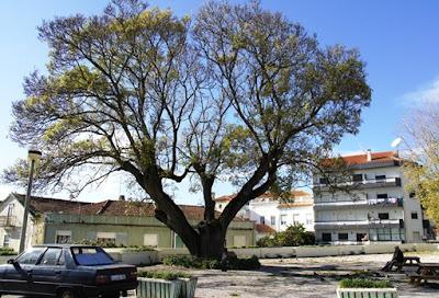 Largo Santo António e Freixo