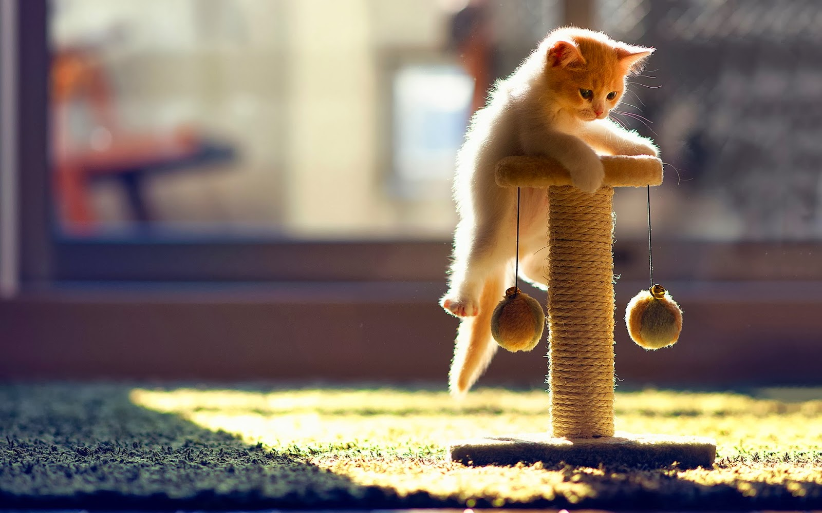 Funny Cat Hd Wallpapers Hd Wallpapers High Quality Wallpapers