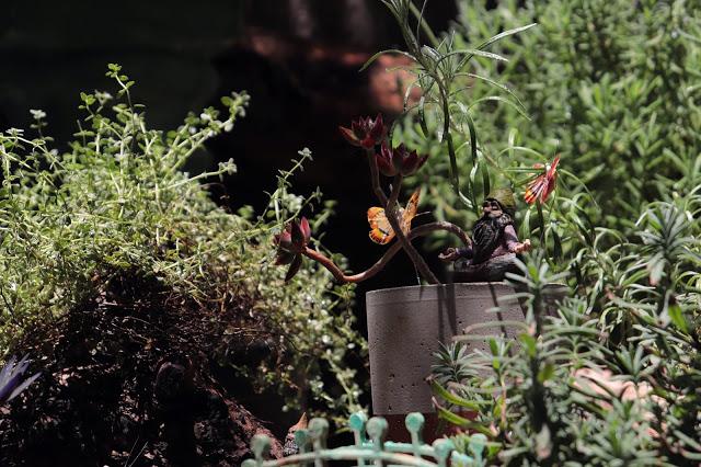 Cuidados com o Jardim e Horta