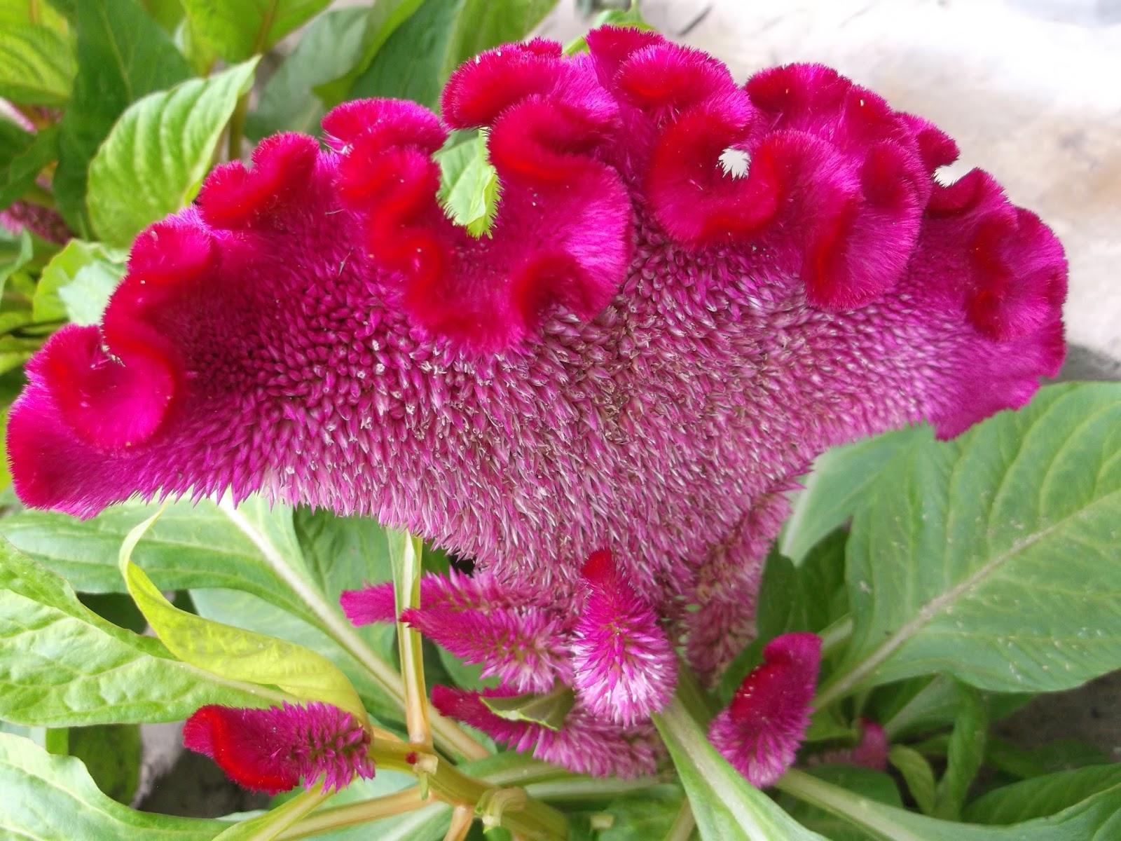 Садовые цветы разновидности картинки