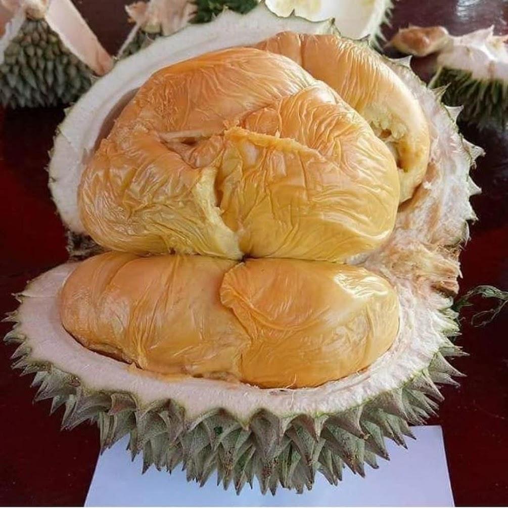 bisa cod bibit durian duri hitam kaki tunggal Sulawesi Selatan