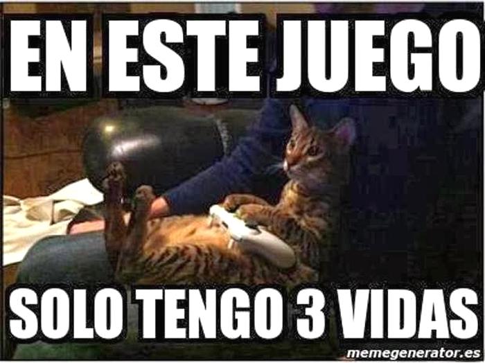 Imagenes Graciosas Chistosas Memes de gatos