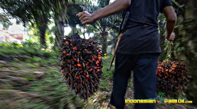 Pemerintah Target Pasar CPO Lokal, Jokowi : Kenapa Harus Tarung Dengan Eropa