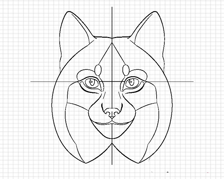 Lynx nose details drawing