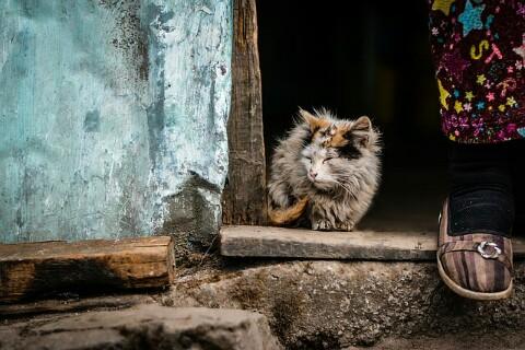 10 Penyebab Dan Cara Mengatasi Bulu Kucing Yang Rontok