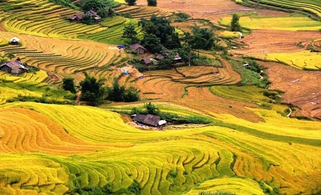 There is a Sapa golden rice valley beautiful to be moved