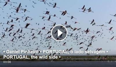 https://www.facebook.com/absolutoportugal/videos/10152790297543935/