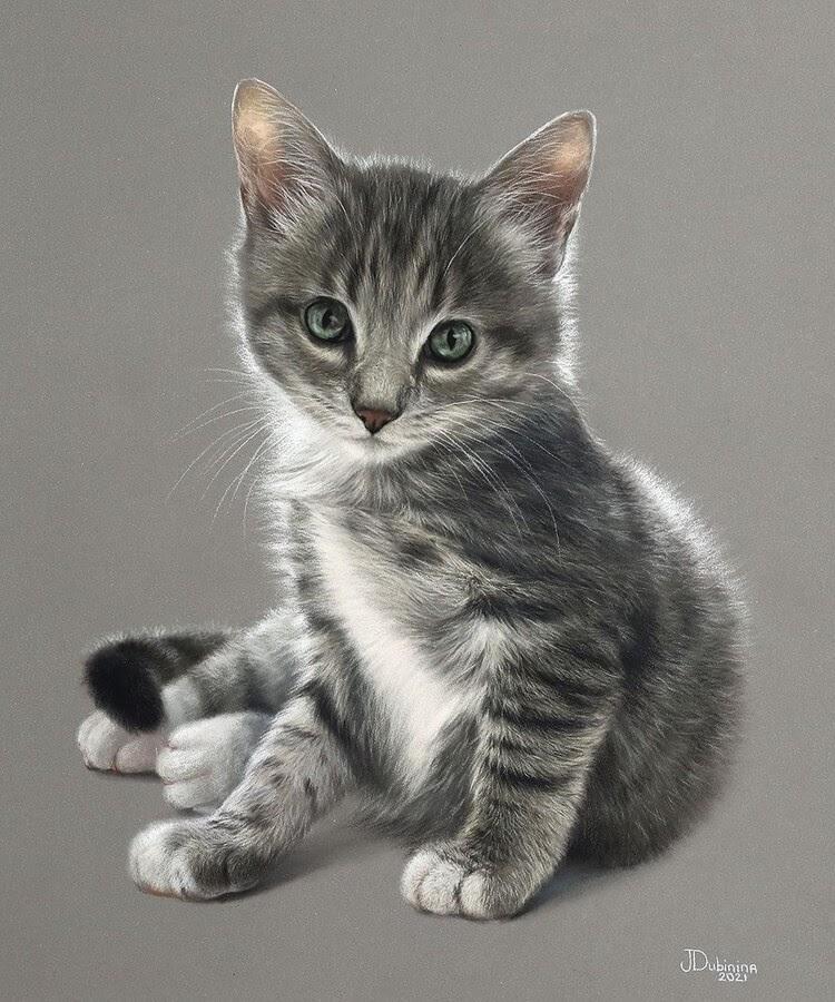 11-Curious-kitten-Julia-Dubinina-www-designstack-co