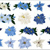 Flowers of Christmas in Blue Clip Art.