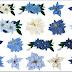 Flores del Clipart Navidad en Tonos Azules.