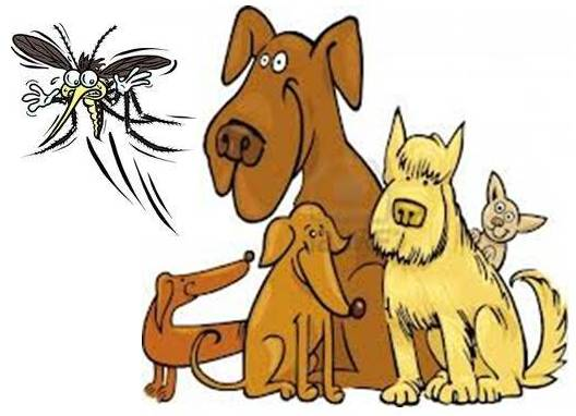 Lemon Natural Mosquito Repellent For Dogs Ottawa Dog