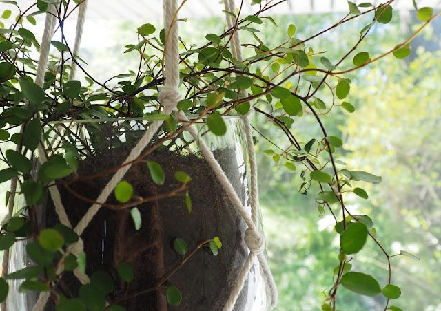 mummottaa, kukkaamppeli, makramee, mummoilua, kotoilu, paluumuuttaja, lasiruukku, kukka ikkunassa