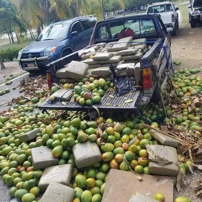 Ocupan 701 libras de marihuana en el cruce de Vicente Noble en una camioneta cargade mangos