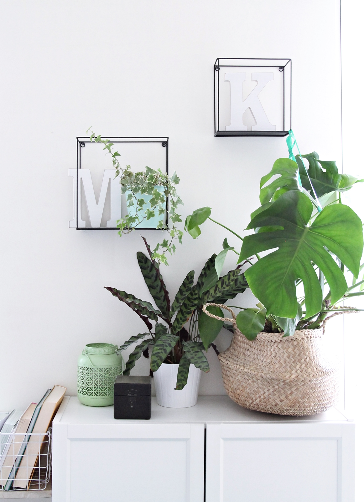 Calathea monstera urban jungle bloggers