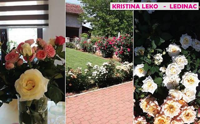 Uživati u vrtu ruža