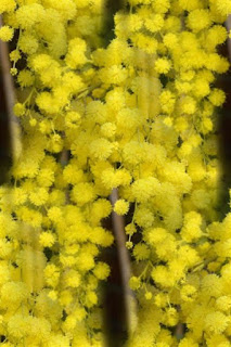 vesennie-cvety