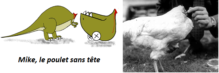La Semaine Du Cerveau Mike Le Poulet Sans Tête Sweet