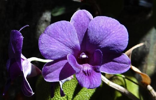 Manual Descomplicando O Cultivo de Orquídeas