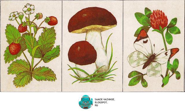 Игры на память СССР советские старые из детства. Игра Шесть картинок Г. Крюкова 1986, Игра природа, растения, лес, грибы, птицы, цветы, ягоды  СССР.