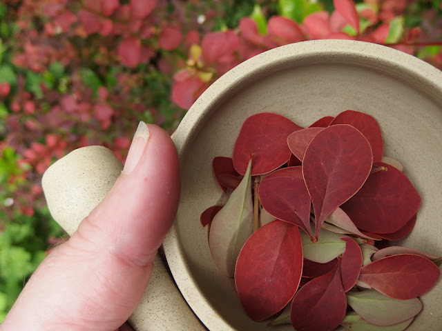 Pestle and mortar with Berberis thunbergii 'Gold Ring' leaves